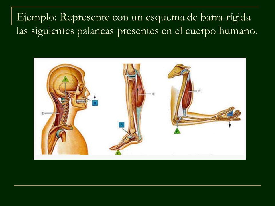 Ejemplo: Represente con un esquema de barra rígida las siguientes palancas presentes en el cuerpo humano.