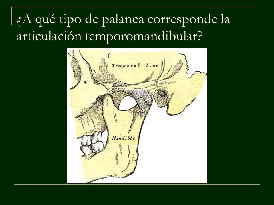 ¿A qué tipo de palanca corresponde la articulación temporomandibular?