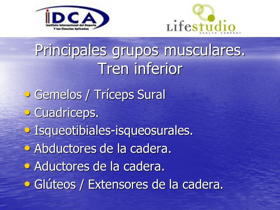 Principales grupos musculares. Tren inferior Gemelos / Tríceps Sural Gemelos / Tríceps Sural Cuadriceps. Cuadriceps. Isqueotibiales-isqueosurales. Isq