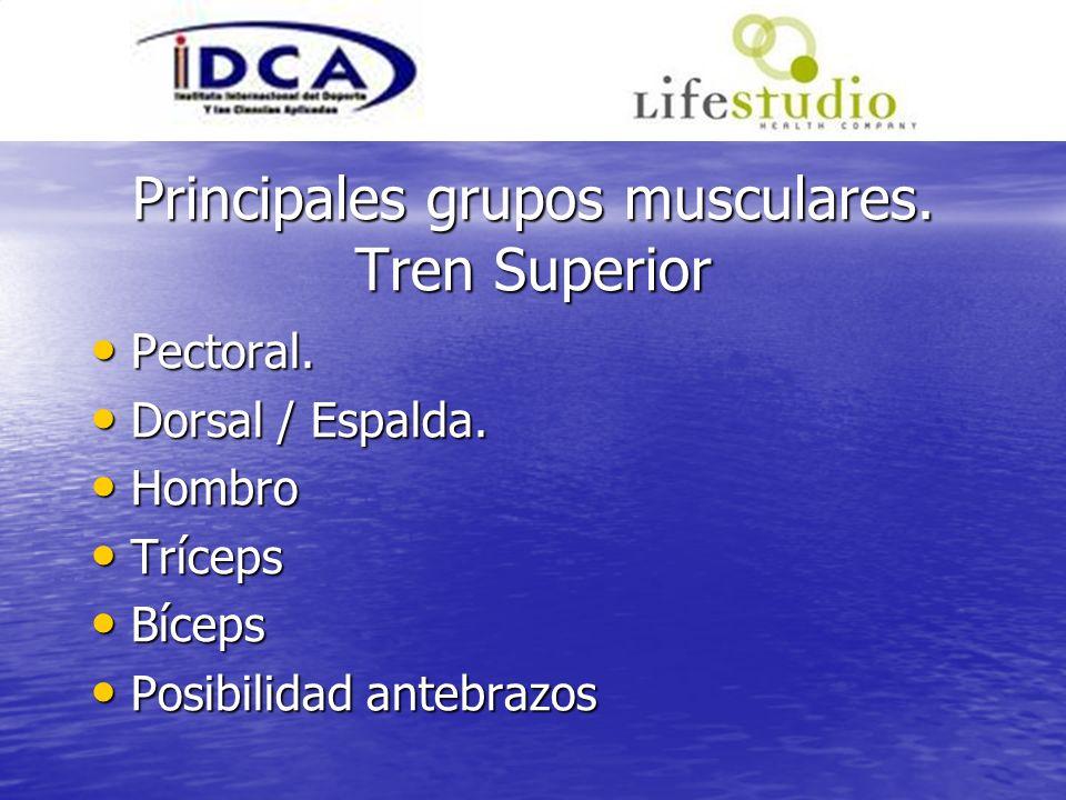 Principales grupos musculares. Tren Superior Pectoral. Pectoral. Dorsal / Espalda. Dorsal / Espalda. Hombro Hombro Tríceps Tríceps Bíceps Bíceps Posib