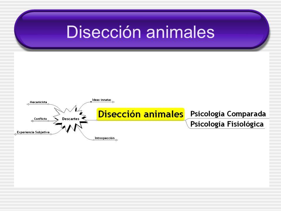 Disección animales