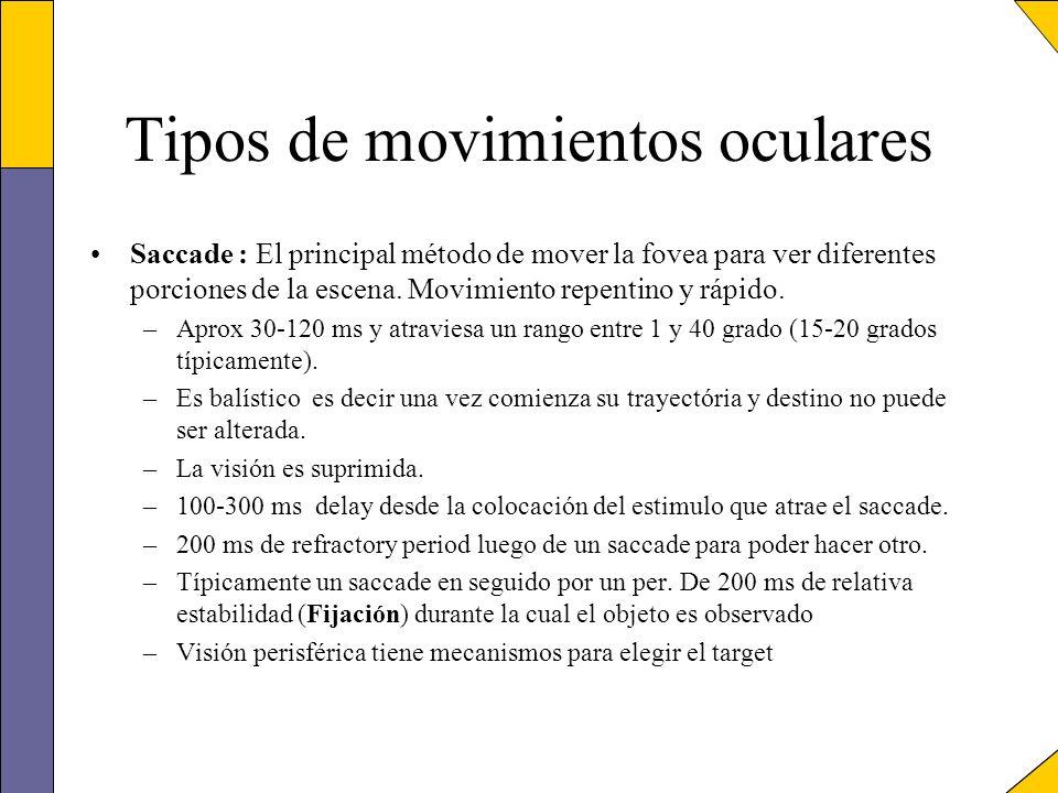 Tipos de movimientos oculares Saccade : El principal método de mover la fovea para ver diferentes porciones de la escena. Movimiento repentino y rápid