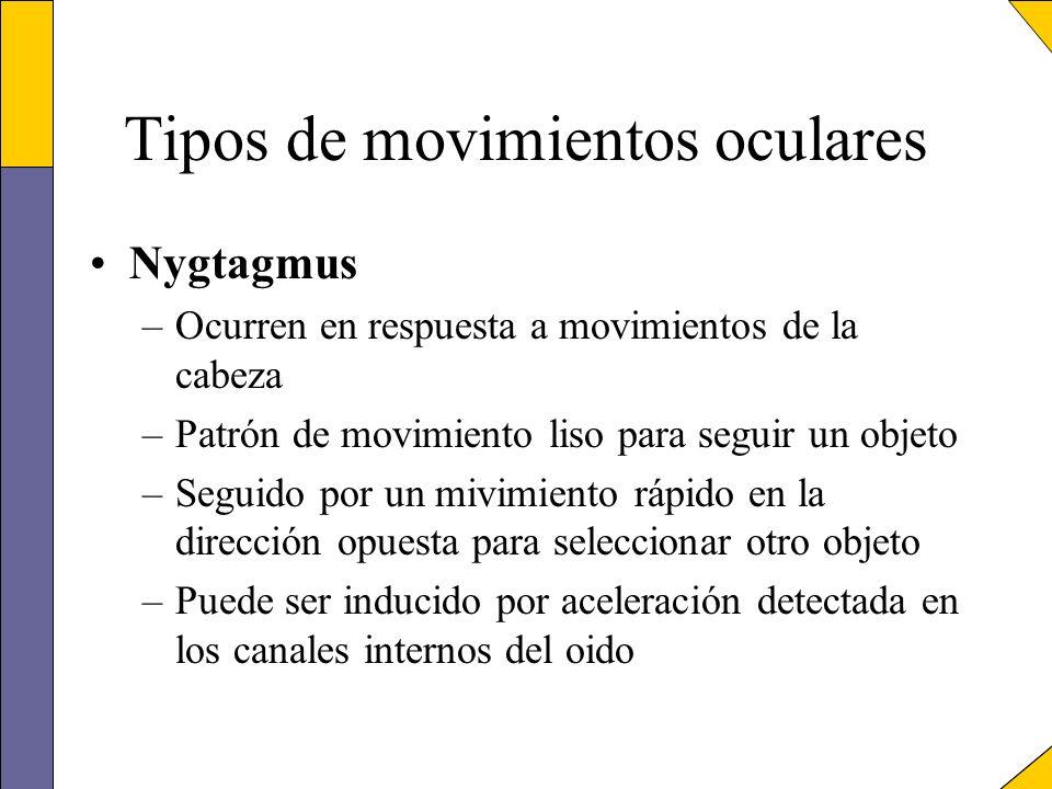 Tipos de movimientos oculares Nygtagmus –Ocurren en respuesta a movimientos de la cabeza –Patrón de movimiento liso para seguir un objeto –Seguido por