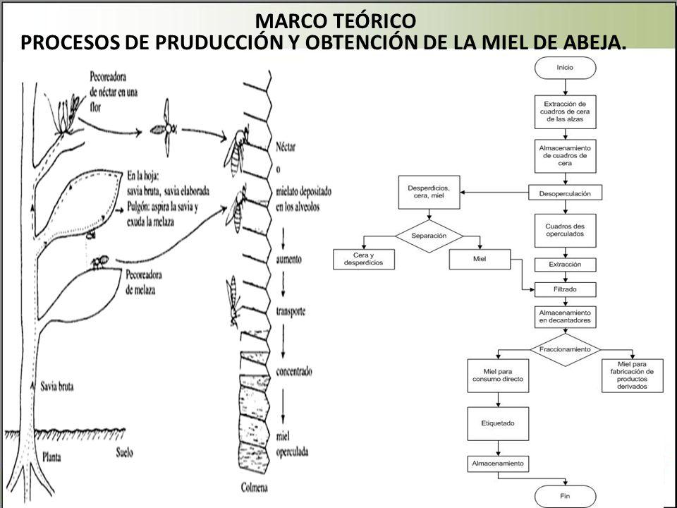 PROCESOS DE PRUDUCCIÓN Y OBTENCIÓN DE LA MIEL DE ABEJA. MARCO TEÓRICO