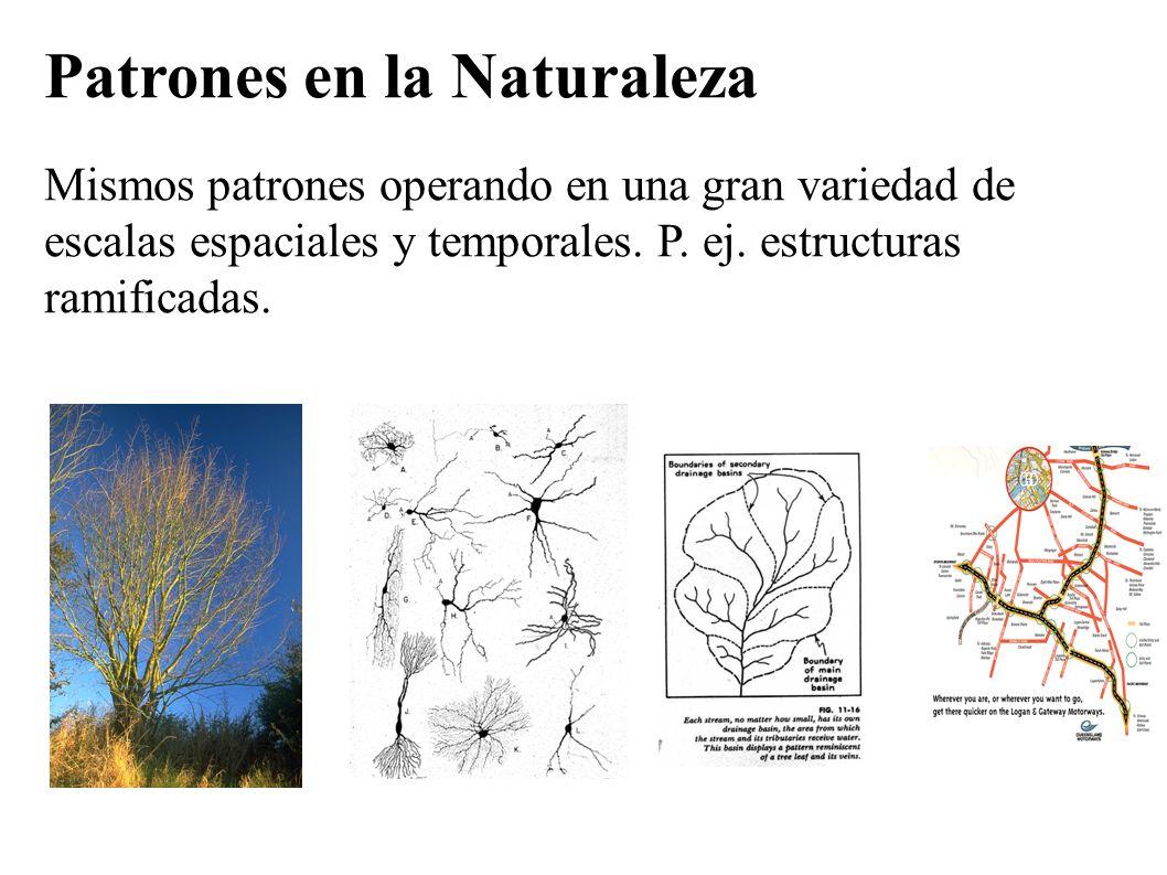 Patrones en la Naturaleza Mismos patrones operando en una gran variedad de escalas espaciales y temporales. P. ej. estructuras ramificadas.