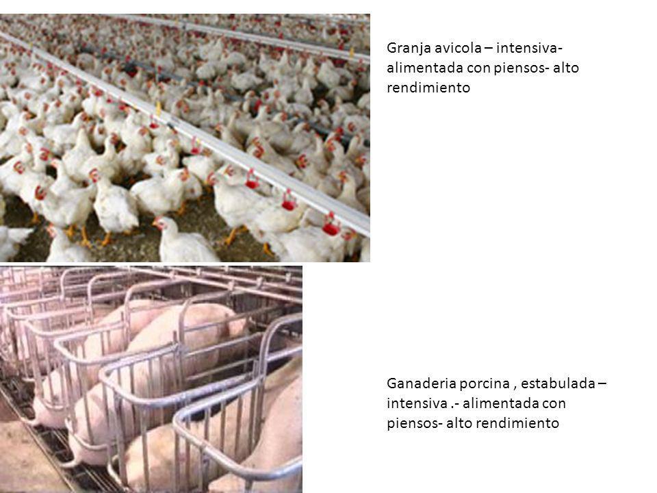 Granja avicola – intensiva- alimentada con piensos- alto rendimiento Ganaderia porcina, estabulada – intensiva.- alimentada con piensos- alto rendimie