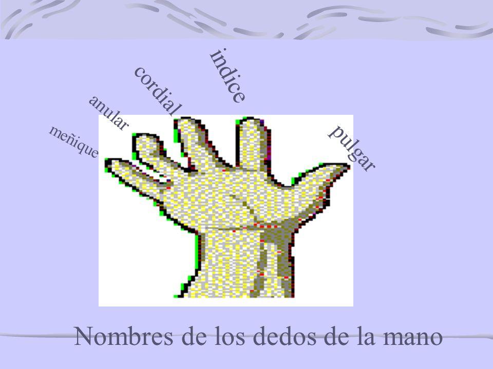 Nombres de los dedos de la mano meñique anular cordial indice pulgar