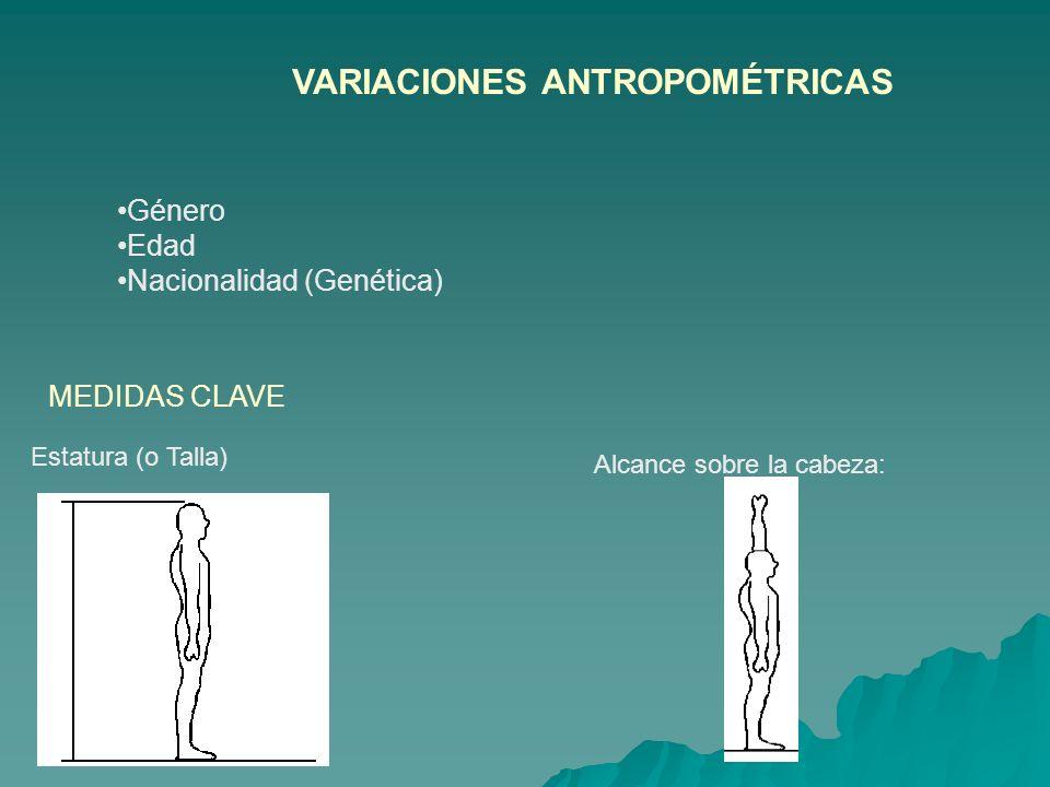 VARIACIONES ANTROPOMÉTRICAS Género Edad Nacionalidad (Genética) MEDIDAS CLAVE Estatura (o Talla) Alcance sobre la cabeza: