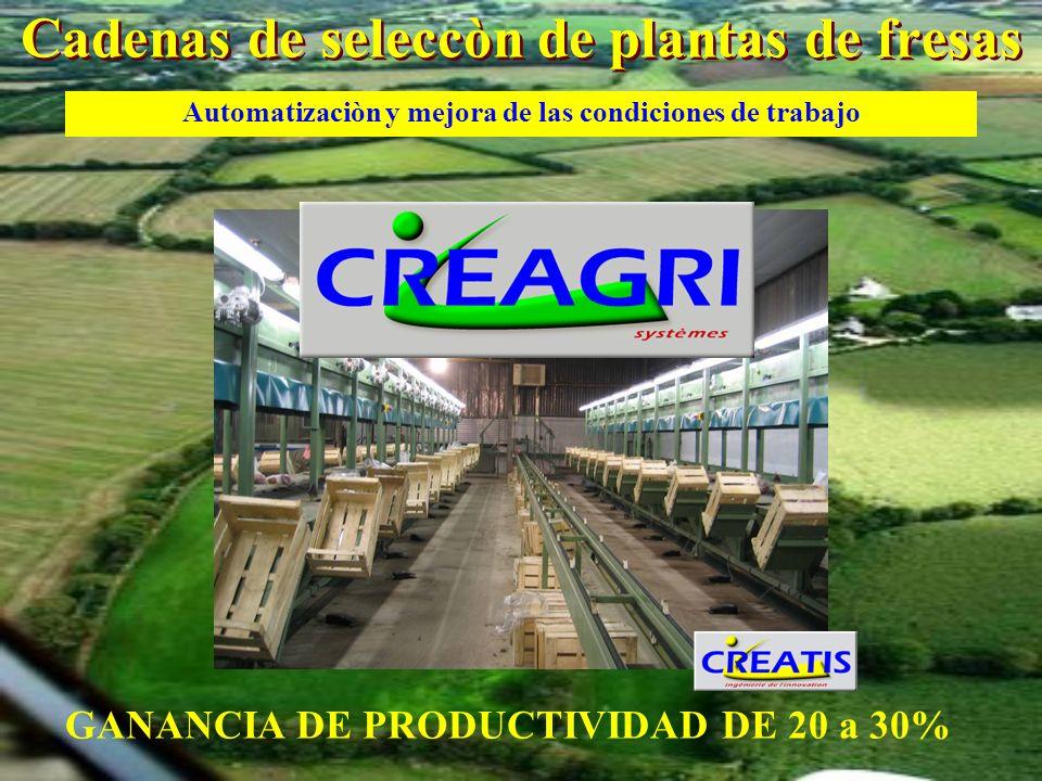 Cadenas de seleccòn de plantas de fresas GANANCIA DE PRODUCTIVIDAD DE 20 a 30% Automatizaciòn y mejora de las condiciones de trabajo