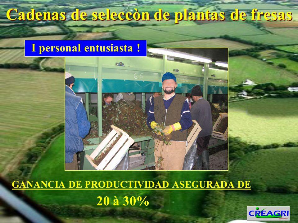 Cadenas de seleccòn de plantas de fresas GANANCIA DE PRODUCTIVIDAD ASEGURADA DE I personal entusiasta .