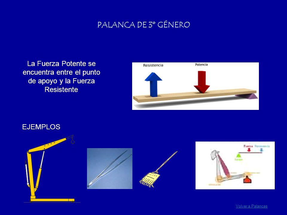 Volver a Palancas PALANCA DE 3º GÉNERO La Fuerza Potente se encuentra entre el punto de apoyo y la Fuerza Resistente EJEMPLOS