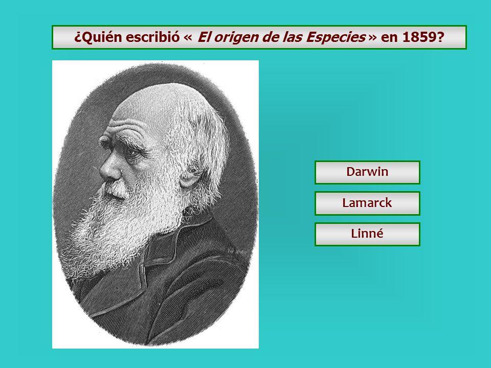¿Qué médico inventó el estetoscopio en 1816? Laennec Lariboisière Necker
