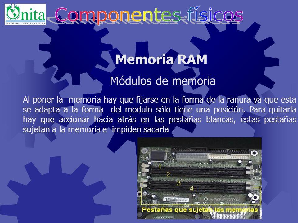 Son placas que contienen los chips de memoria y que se conectan a la tarjeta principal del ordenador.