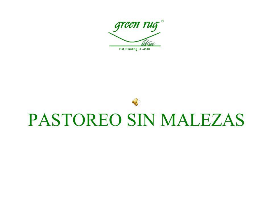 PASTOREO SIN MALEZAS