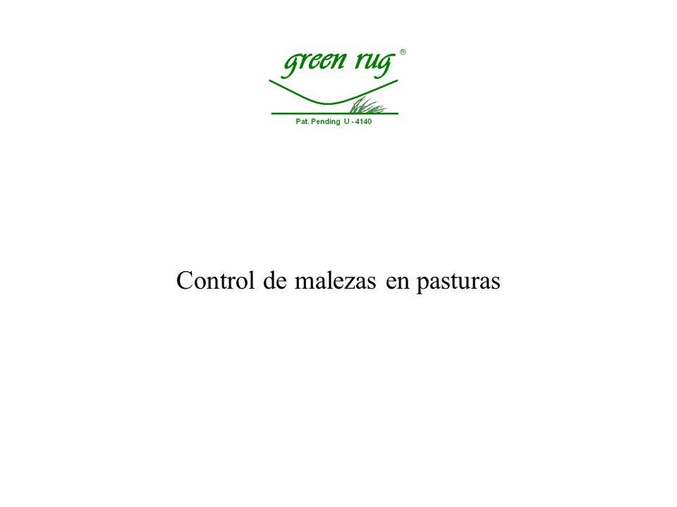 Uso en pasturas, Mejoramientos en cobertura, Campo natural, Semilleros.