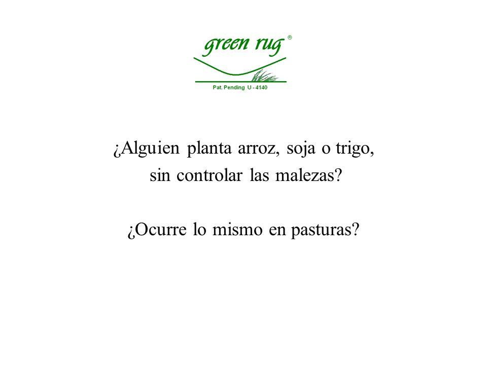 Al aumentar la disponibilidad de nitrógeno en el suelo, aumenta más el crecimiento de las malezas que el crecimiento de la pastura.