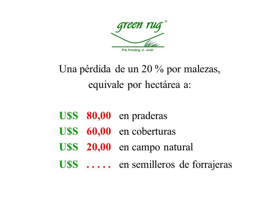 Una pérdida de un 20 % por malezas, equivale por hectárea a: U$S 80,00 en praderas U$S 60,00 en coberturas U$S 20,00 en campo natural U$S.....