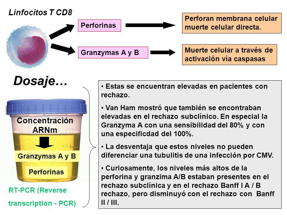 Linfocitos T CD8 Perforinas Granzymas A y B Perforan membrana celular muerte celular directa. Muerte celular a través de activación vía caspasas Dosaj