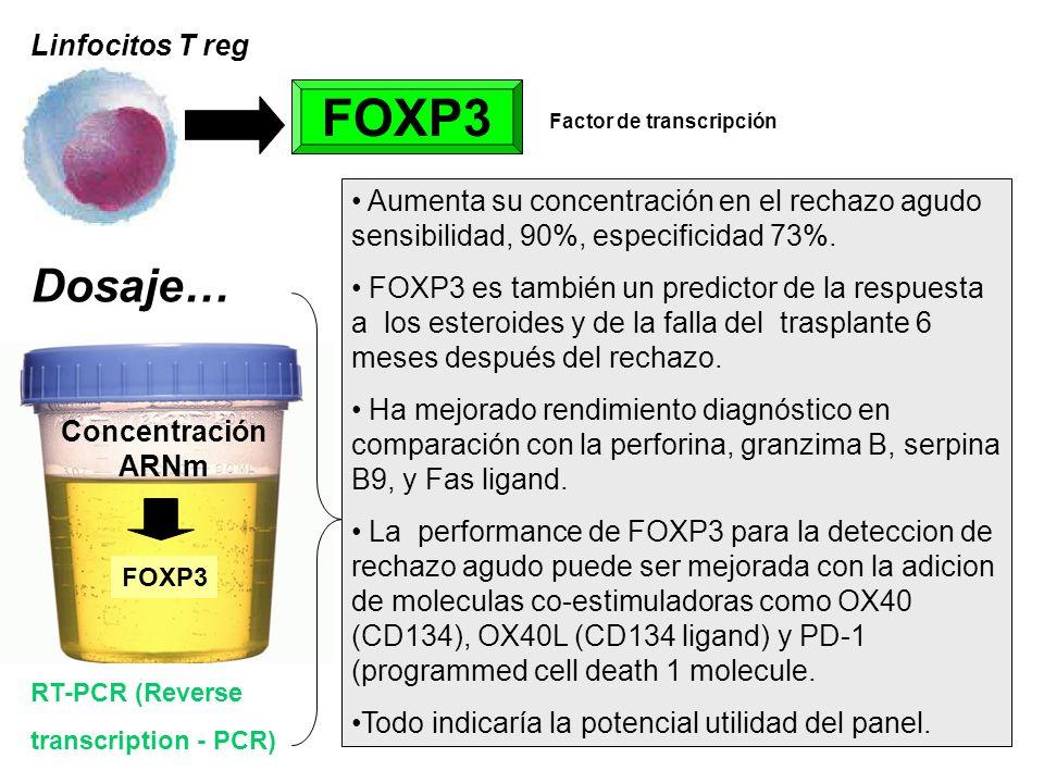 Linfocitos T reg FOXP3 Factor de transcripción RT-PCR (Reverse transcription - PCR) Concentración ARNm FOXP3 Aumenta su concentración en el rechazo ag
