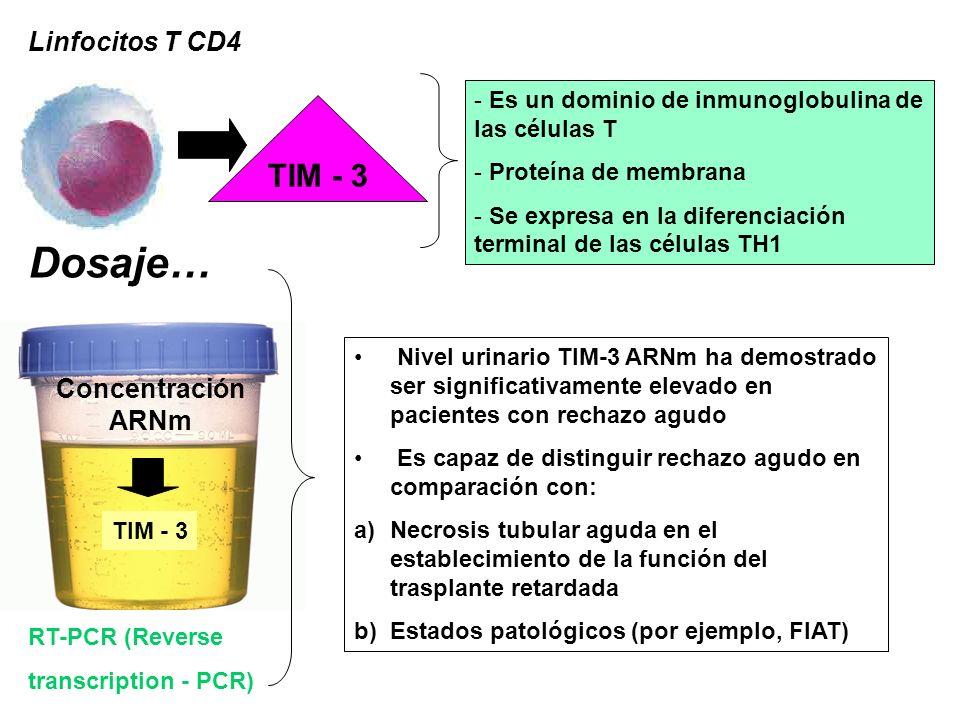 Linfocitos T CD4 RT-PCR (Reverse transcription - PCR) TIM - 3 Concentración ARNm TIM - 3 - - Es un dominio de inmunoglobulina de las células T - - Pro