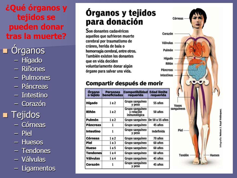 ¿Qué órganos y tejidos se pueden donar tras la muerte.