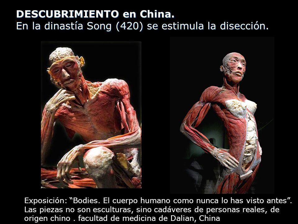 DESCUBRIMIENTO en China. En la dinastía Song (420) se estimula la disección. Exposición: Bodies. El cuerpo humano como nunca lo has visto antes. Las p
