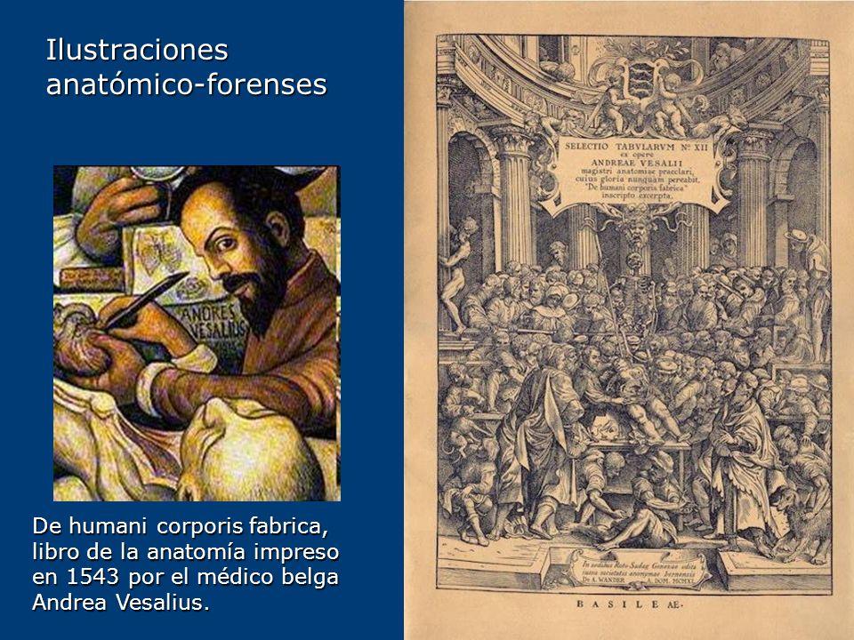 Ilustracionesanatómico-forenses De humani corporis fabrica, libro de la anatomía impreso en 1543 por el médico belga Andrea Vesalius.