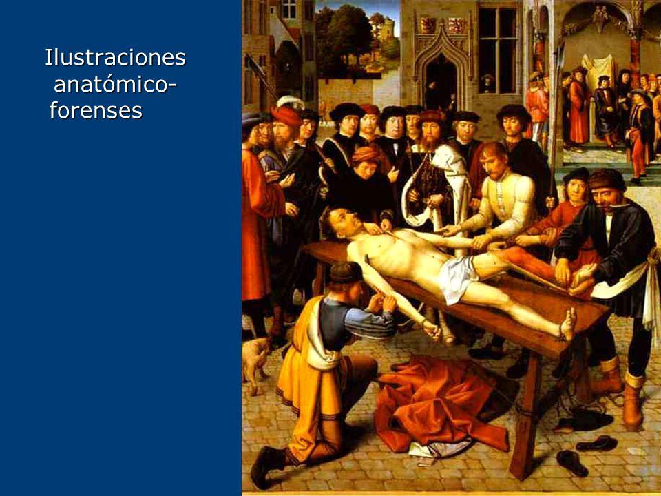Ilustraciones anatómico- forenses