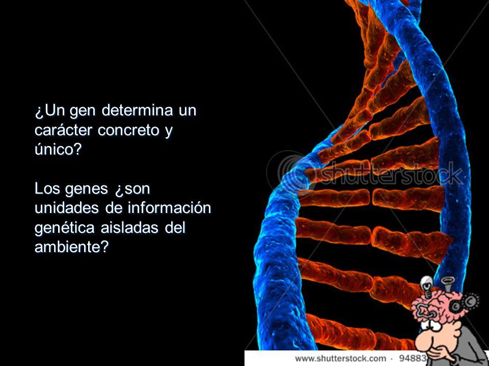 ¿Un gen determina un carácter concreto y único? Los genes ¿son unidades de información genética aisladas del ambiente?