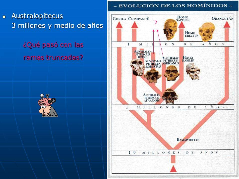 37 Australopitecus Australopitecus 3 millones y medio de años ¿Qué pasó con las ramas truncadas? ?