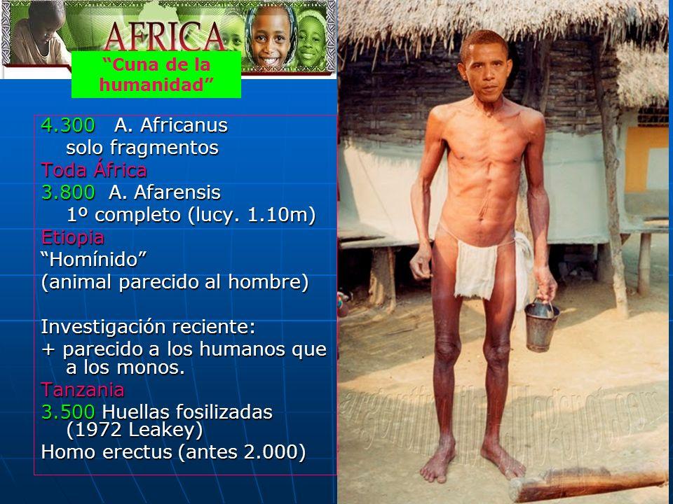 39 4.300 A. Africanus solo fragmentos Toda África 3.800 A. Afarensis 1º completo (lucy. 1.10m) EtiopiaHomínido (animal parecido al hombre) Investigaci