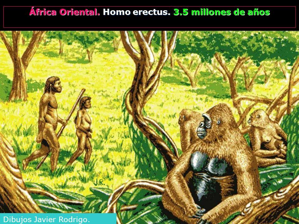 África Oriental. Homo erectus. 3.5 millones de años Dibujos Javier Rodrigo.