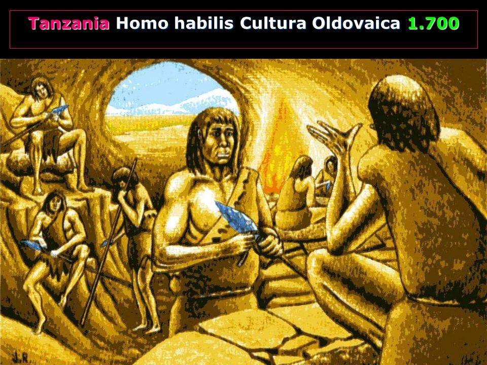 Tanzania Homo habilis Cultura Oldovaica 1.700