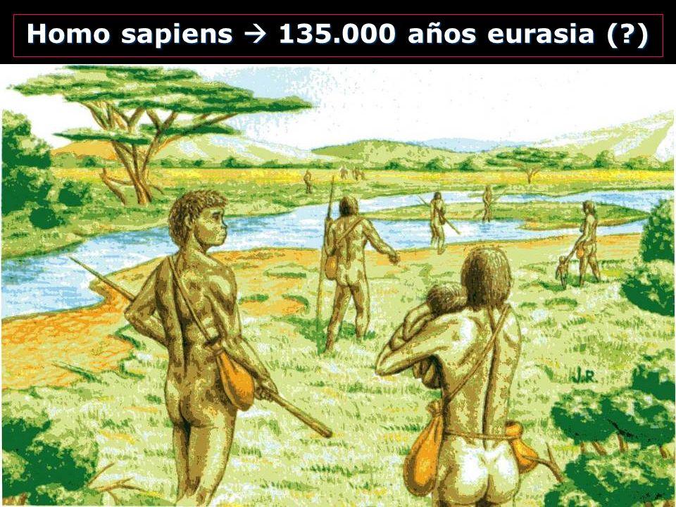 Homo sapiens 135.000 años eurasia (?)