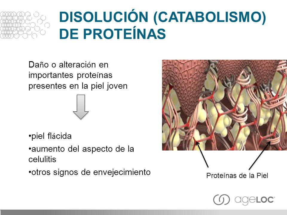 Da ñ o o alteraci ó n en importantes prote í nas presentes en la piel joven piel fl á cida aumento del aspecto de la celulitis otros signos de envejec
