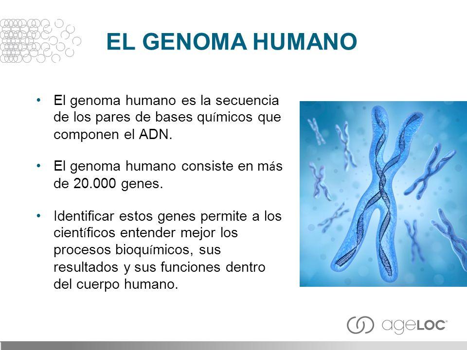 El genoma humano es la secuencia de los pares de bases qu í micos que componen el ADN. El genoma humano consiste en m á s de 20.000 genes. Identificar