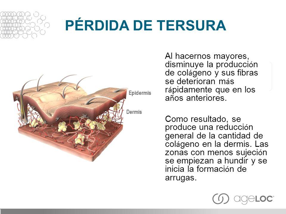 Al hacernos mayores, disminuye la producci ó n de col á geno y sus fibras se deterioran m á s r á pidamente que en los a ñ os anteriores. Como resulta