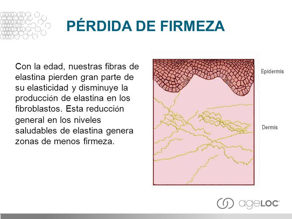 Con la edad, nuestras fibras de elastina pierden gran parte de su elasticidad y disminuye la producci ó n de elastina en los fibroblastos. Esta reducc