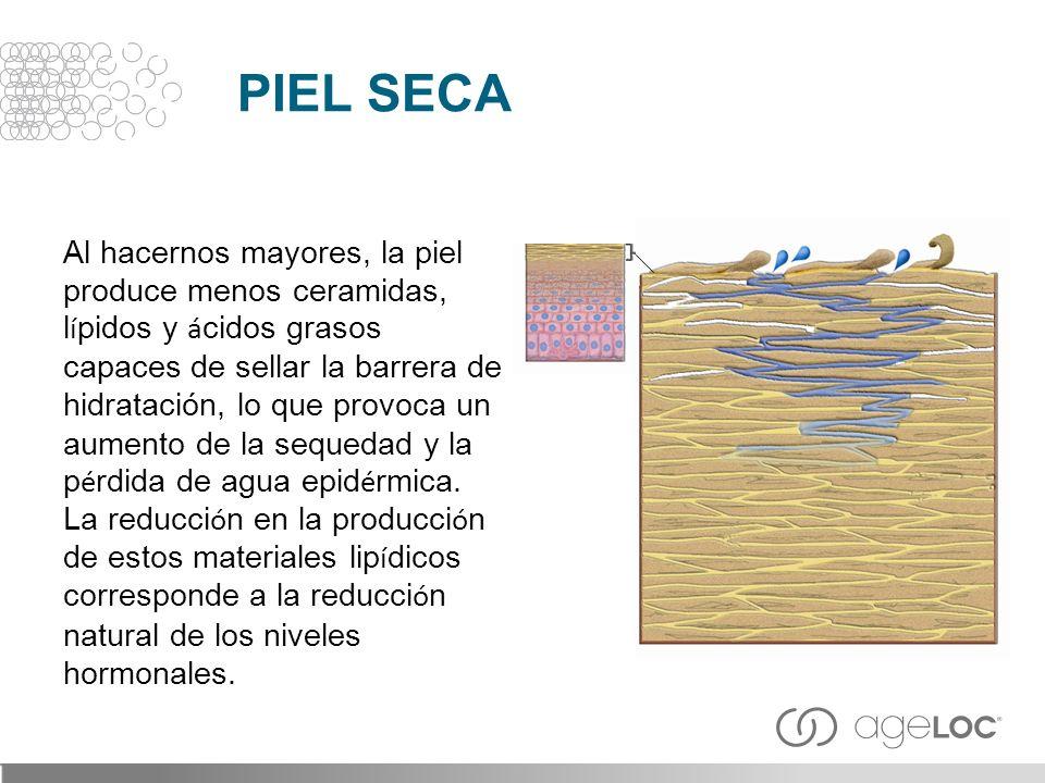 Al hacernos mayores, la piel produce menos ceramidas, l í pidos y á cidos grasos capaces de sellar la barrera de hidratación, lo que provoca un aument