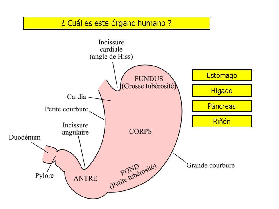 ¿ Cuál es el componente principal del sol (a 74 %) ? NitrógenoHelio Hydrógeno
