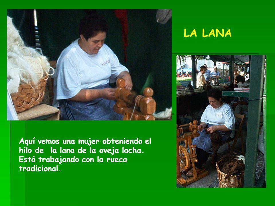 Aquí vemos una mujer obteniendo el hilo de la lana de la oveja lacha. Está trabajando con la rueca tradicional. LA LANA