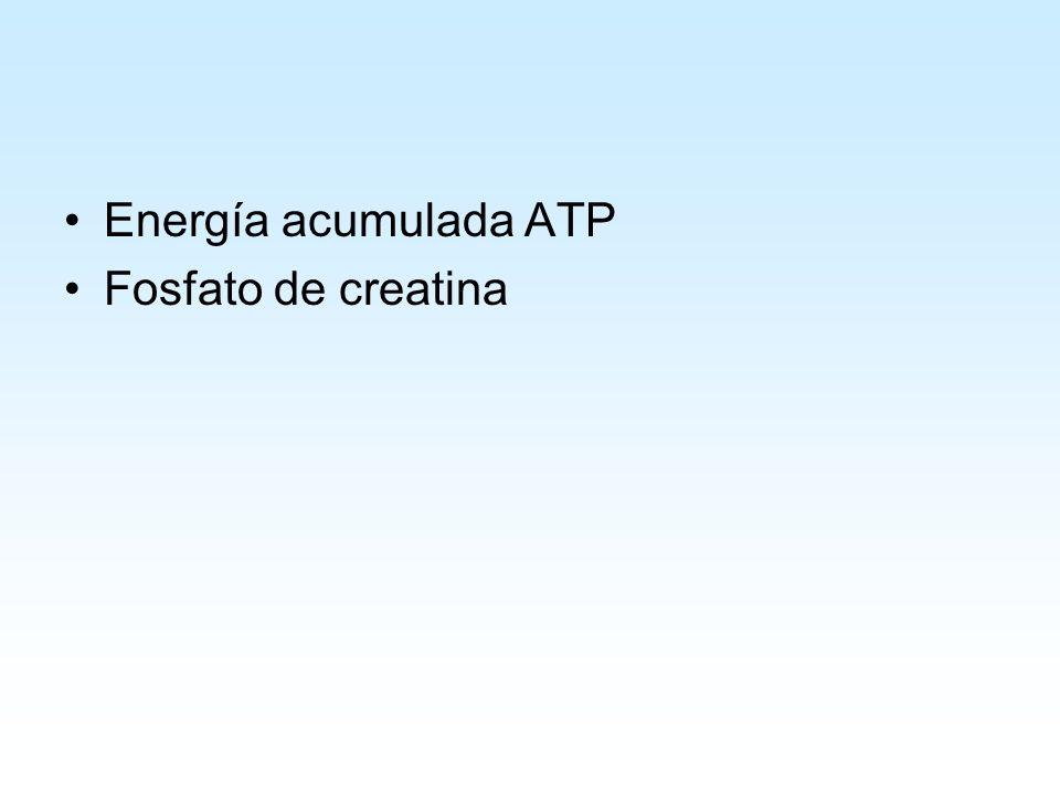 Energía acumulada ATP Fosfato de creatina