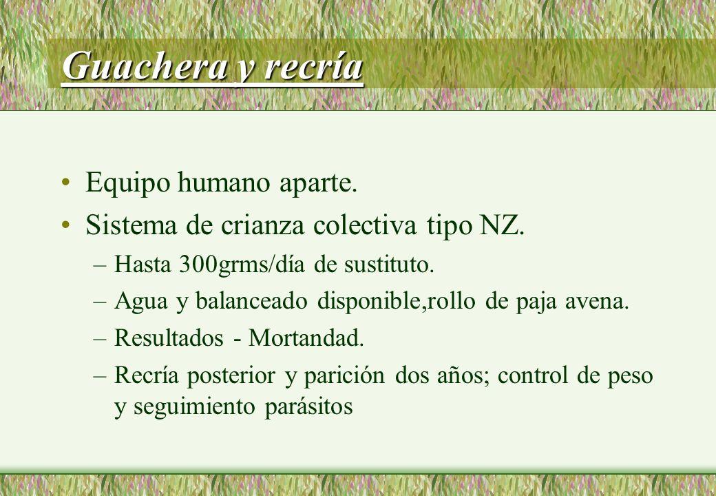 Guachera y recría Equipo humano aparte.Sistema de crianza colectiva tipo NZ.