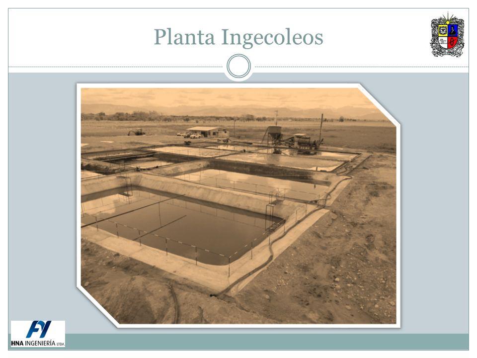 Planta Ingecoleos