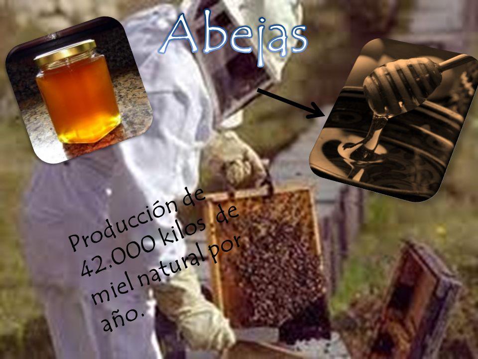 Producción de 42.000 kilos de miel natural por año.