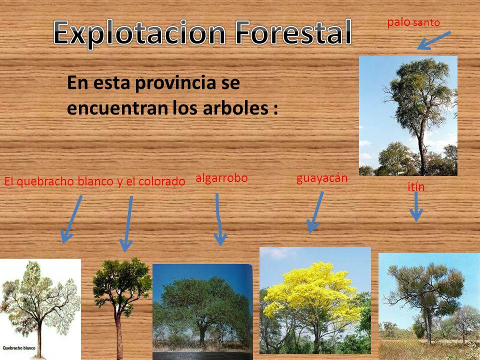 palo santo En esta provincia se encuentran los arboles : El quebracho blanco y el colorado algarrobo guayacán itín