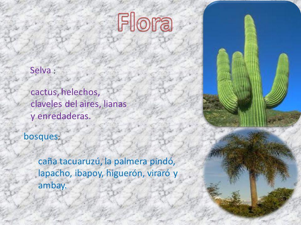 Selva ; cactus, helechos, claveles del aires, lianas y enredaderas.