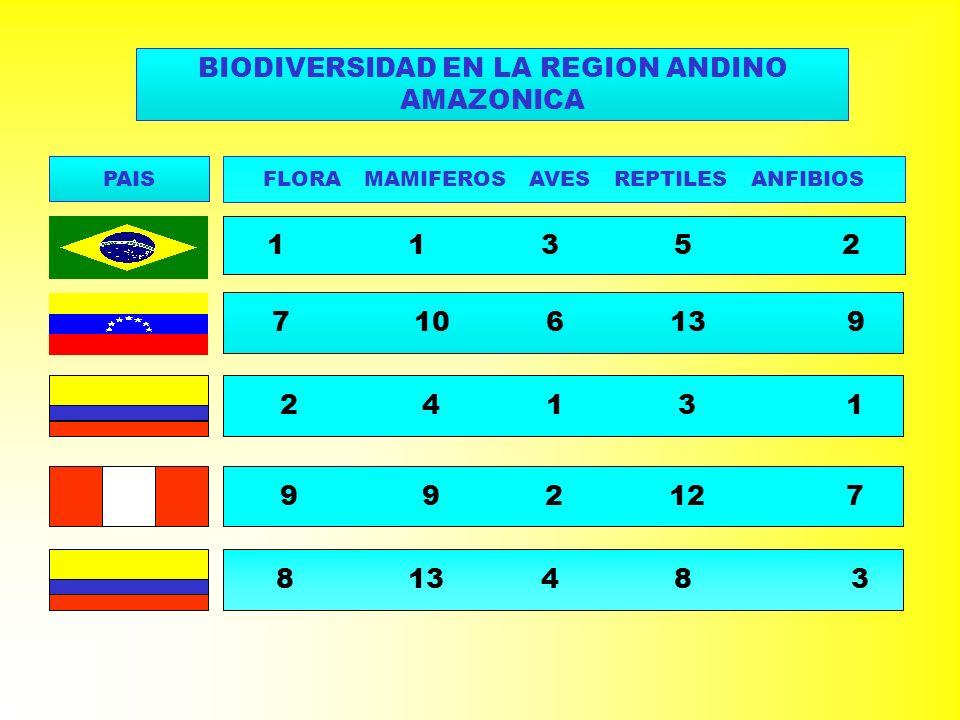 BIODIVERSIDAD EN LA REGION ANDINO AMAZONICA PAIS FLORA MAMIFEROS AVES REPTILES ANFIBIOS 1 1 3 5 2 7 10 6 13 9 2 4 1 3 1 9 9 2 12 7 8 13 4 8 3