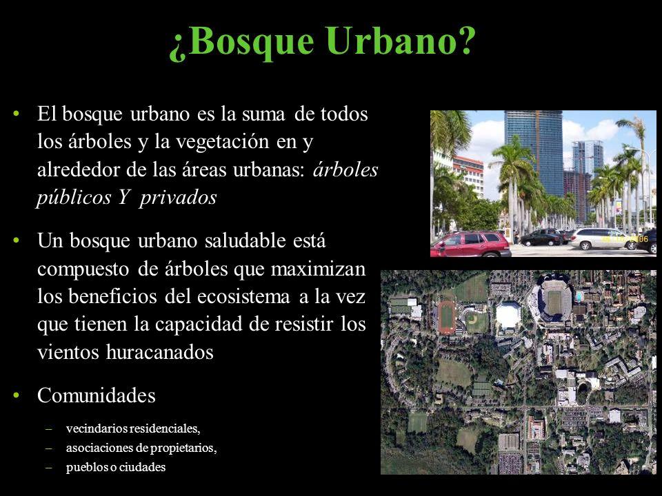 El bosque urbano es la suma de todos los árboles y la vegetación en y alrededor de las áreas urbanas: árboles públicos Y privados Un bosque urbano sal