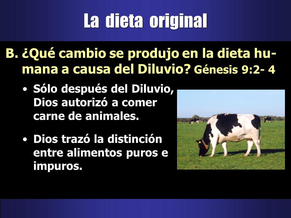 Sólo después del Diluvio, Dios autorizó a comer carne de animales. Dios trazó la distinción entre alimentos puros e impuros. B.¿Qué cambio se produjo